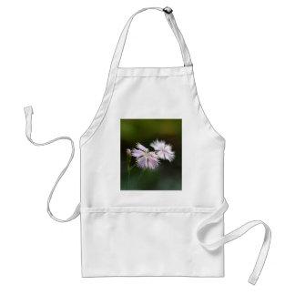 Clove Pink (Dianthus caryophyllus) Adult Apron
