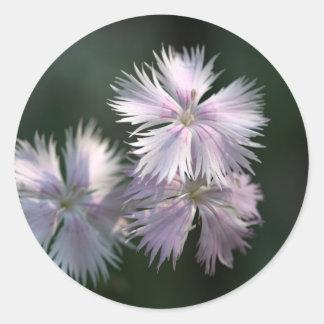 Clove Pink (Dianthus caryophyllus) Classic Round Sticker