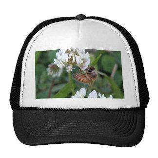 Clover bee mesh hat