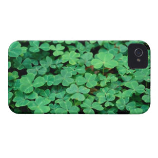 Clover Close-Up iPhone 4 Cover