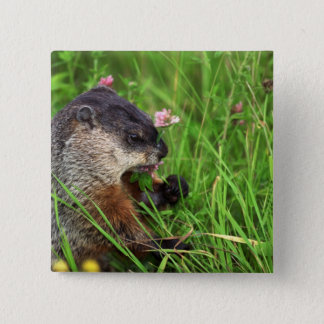 Clover-eating Groundhog Pinback Button