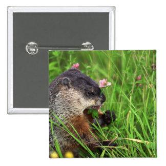 Clover-eating Groundhog Pinback Button