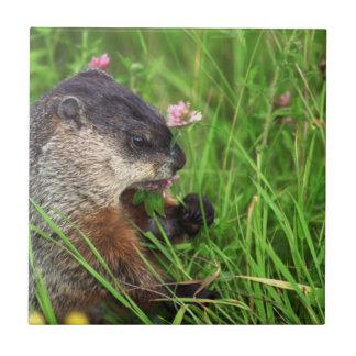 Clover-eating Groundhog Tile
