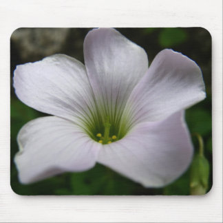 Clover flower mouse pad