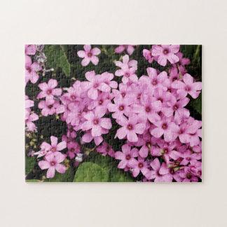 Clover flowers - Puzzle