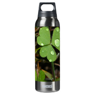 Clover Leave 16 Oz Insulated SIGG Thermos Water Bottle
