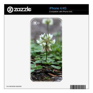 Clover on a tared road. skins for iPhone 4S