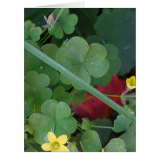 Clover Patch  Big Greeting Card