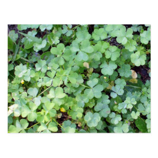 Clover Patch Postcard