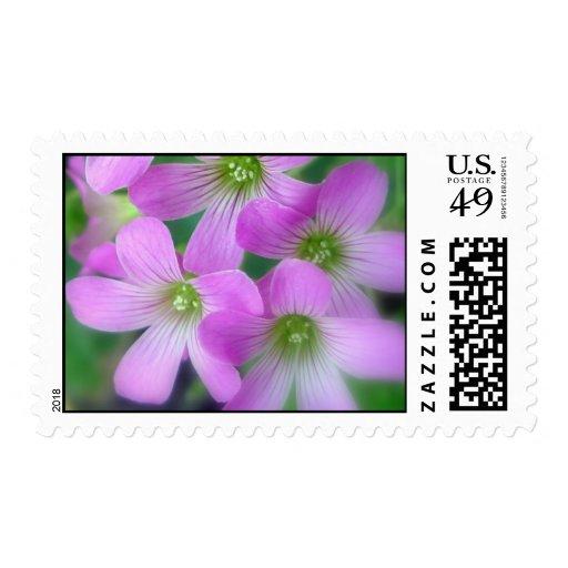 Clover Stamp