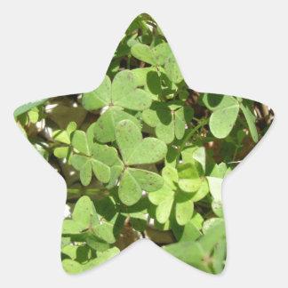 Clover Star Sticker