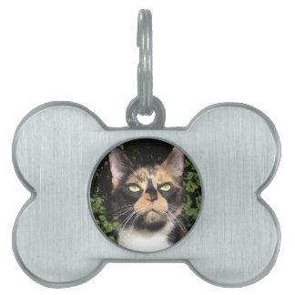 Clover the Calico Pet Name Tag