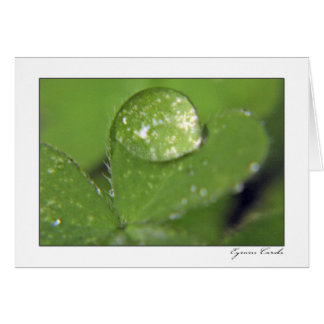 Clover with a Dew Drop Card