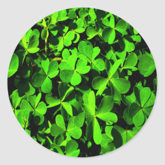 Clovers of Luck on St. Patrick's Day Classic Round Sticker