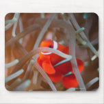 Clown anemonefish 2 mouse pad