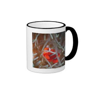 Clown anemonefish 2 ringer mug
