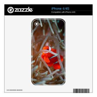 Clown anemonefish 2 iPhone 4 decal