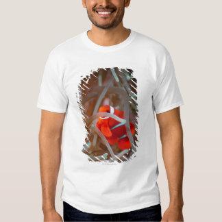 Clown anemonefish 2 t-shirt