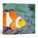 Clown anemonefish 3 ring binder