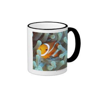 Clown anemonefish 3 ringer mug