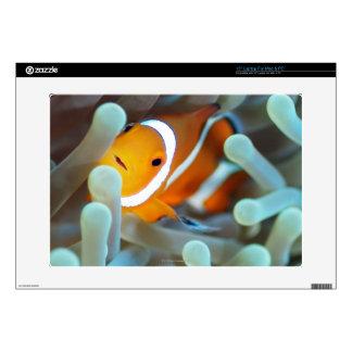 "Clown anemonefish 3 skin for 15"" laptop"