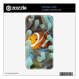 Clown anemonefish 3 skins for the iPhone 4S