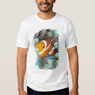 Clown anemonefish 3 tee shirt