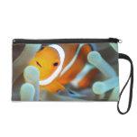 Clown anemonefish 3 wristlet purses