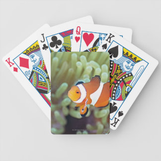 Clown anemonefish 4 bicycle playing cards