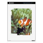 Clown anemonefish 4 iPad 3 skin