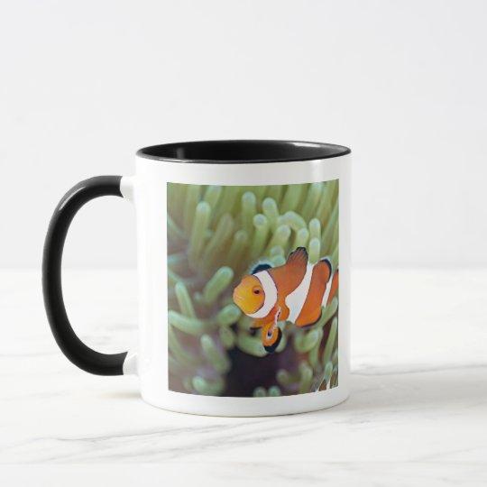 Clown anemonefish 4 mug