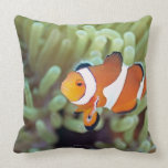 Clown anemonefish 4 pillows