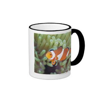 Clown anemonefish 4 ringer mug
