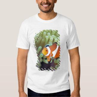 Clown anemonefish 4 shirt