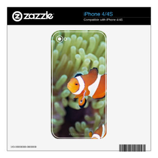 Clown anemonefish 4 skins for iPhone 4S