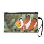 Clown anemonefish 4 wristlet purse