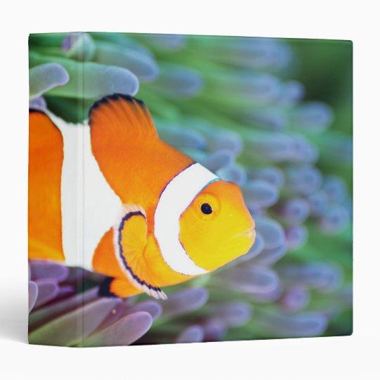 Clown anemonefish binder