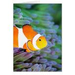 Clown anemonefish card