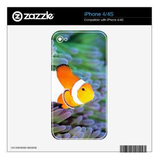 Clown anemonefish iPhone 4 skin