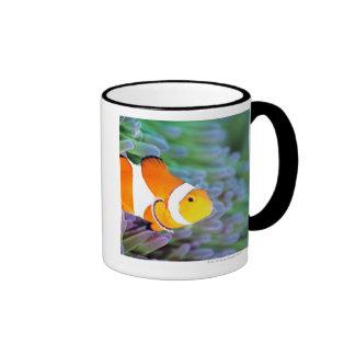Clown anemonefish ringer mug