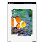 Clown anemonefish skins for iPad 3