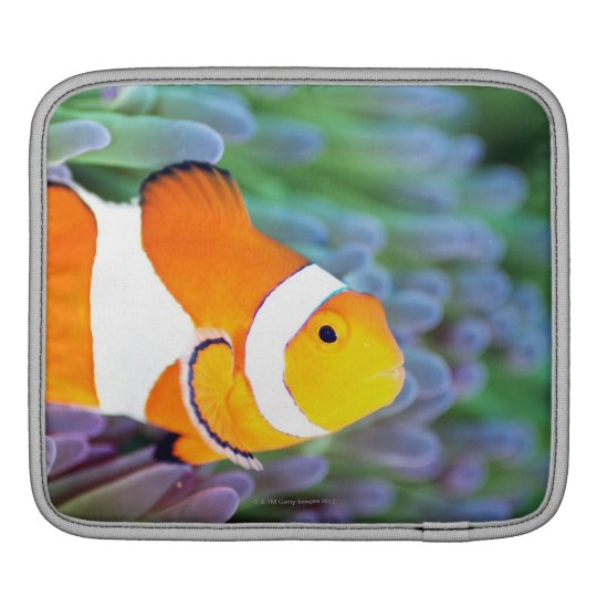Clown anemonefish sleeve for iPads