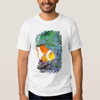Clown anemonefish t shirt