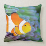 Clown anemonefish throw pillows