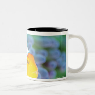 Clown anemonefish Two-Tone coffee mug