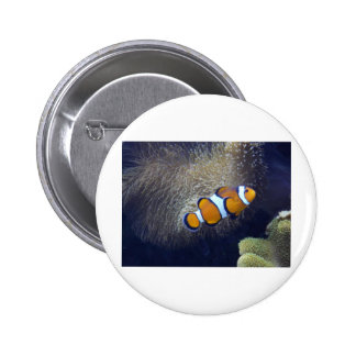 clown fish, 2 button