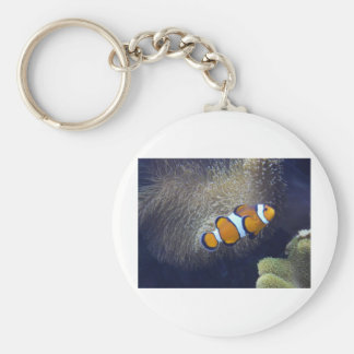 clown fish, 2 keychain
