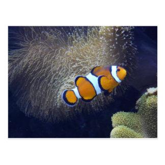 clown fish, 2 postcard