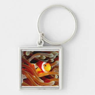 Clown fish and  bubble anemone keyring keychain
