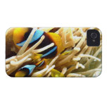 Clown Fish Blackberry Case